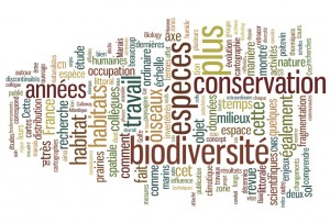 Research wordle1-300x203
